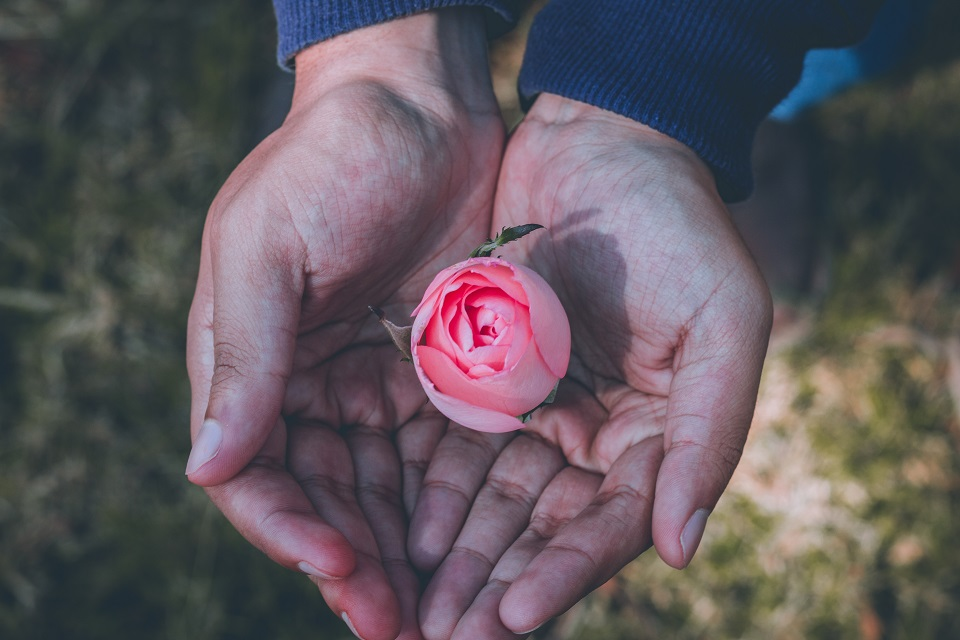 Person holding a pink rose