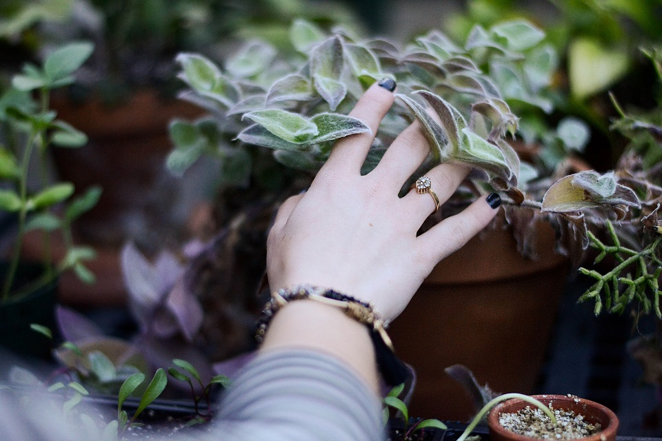 Woman touching succulents